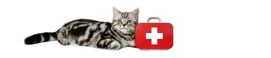 Erste-Hilfe Videos für den Notfall