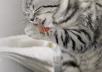 Hygiene im Katzenhaushalt