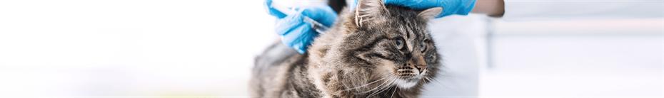 Katzen impfen lassen