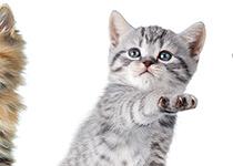 Katzenglück von Anfang an