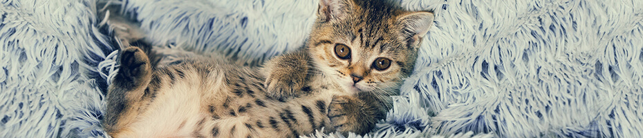 Katzenpflege im Winter