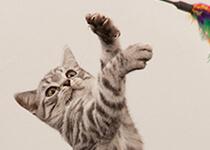 Katzentraining: Fitnesstraining für Ihre Katze