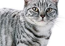Seniorenkatzen