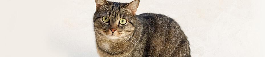 So bringen Sie das Fell Ihrer Katze zum Glänzen.