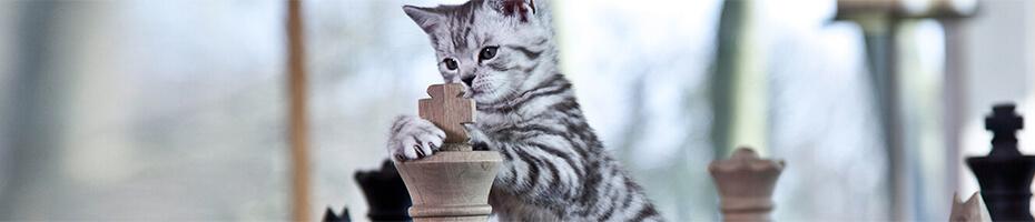 So spielen Sie richtig mit Ihrer Katze