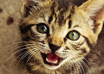 Warum und wann Sie Ihre Katze kastrieren sollten