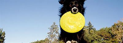 Behendigheidstraining met je hond of puppy