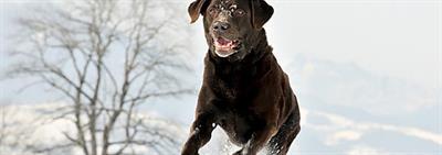 Benodigdheden voor je hond of puppy