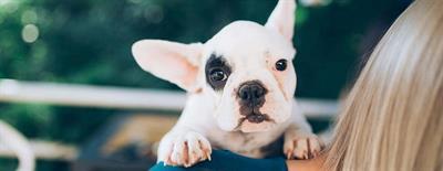 Een puppy uit het asiel