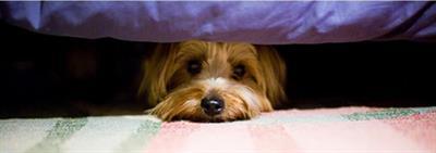 Eerste hulp voor honden en puppy's