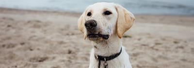 Evenwichtige voeding voor snelgroeiende puppy's