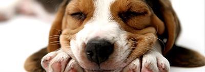 Je puppy sociaal gedrag aanleren