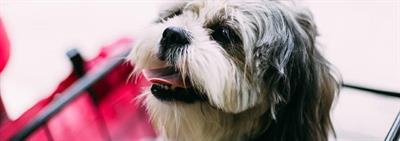 Zorgen dat je hond of puppy niet op je spullen kauwt