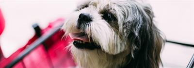 Augmenter l'assurance de votre chien