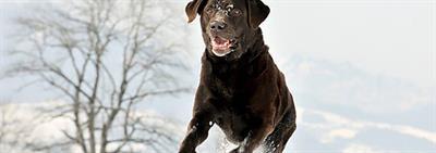 Comment gérer un chien stressé?