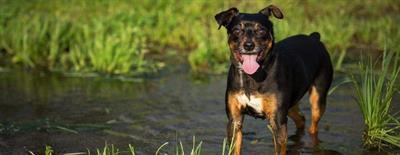 Éduquer son chien, la méthode du clicker training