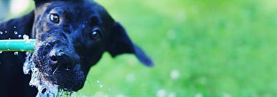 Empêcher votre chien de creuser dans votre jardin