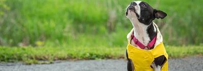 Quelle est la race de chien ou de chiot qui vous convient?