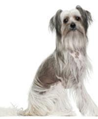 Pedigree® Chinese Naakthond