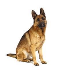 Pedigree® Duitse herdershond