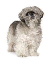 Pedigree® Lhasa Apso