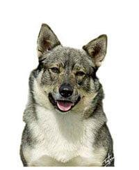 Pedigree® Zweedse Vallhund