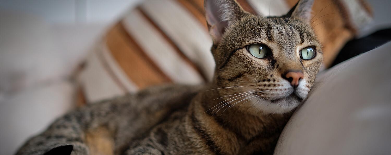INDOOR CAT CARE & UNIQUE NEEDS