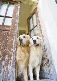 Wie Sie Ihr Zuhause Hundesicher Machen Konnen Pedigree