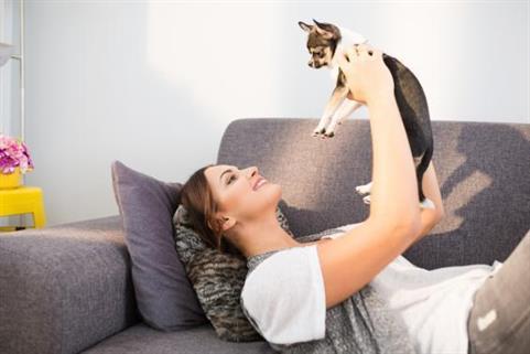 4 conseils pour vivre avec un chien en appartement