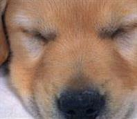 Premiers secours pour votre chien ou chiot | Pedigree®