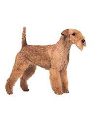 Pedigree® Lakeland Terrier