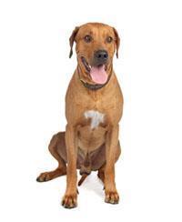 Pedigree® Le chien de Rhodésie