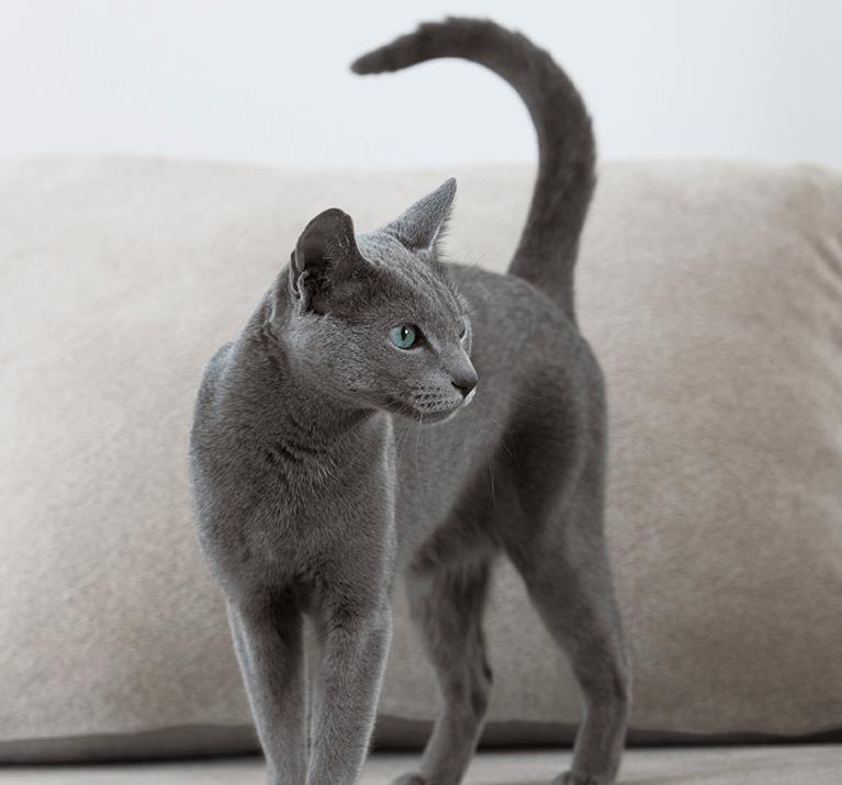 Nourriture humide: tous les avantages pour votre chat et sa santé