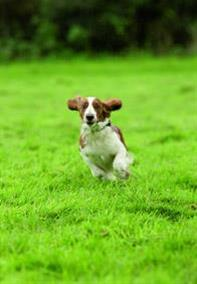 Train your dog to come on command