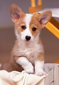 Pedigree® House training your dog