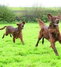 Training to control your dog's urge to chase