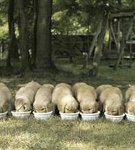 Problem-free mealtimes for puppies