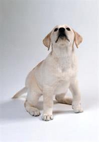 Pedigree® Basic Training Tips
