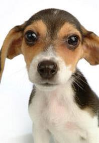 Dog toilet training trouble