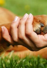 Pedigree® Train Your Dog To Shake Paws