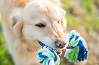Our Tips to Keep your Dog's Teeth and Gums Healthy