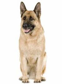 Pedigree® German Shepherd Dog