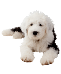 Pedigree® Old English Sheep Dog