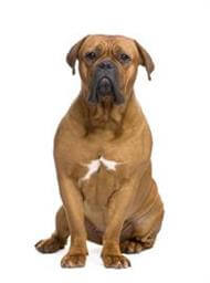 Pedigree® Dogue De Bordeaux