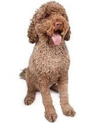 Pedigree® Portuguese Water Dog