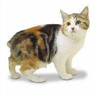 Ras Kucing Manx<br />