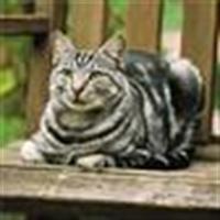 Ras Kucing Moggie<br />
