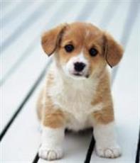 f9e83c847e5cb2 Wat kost een hond