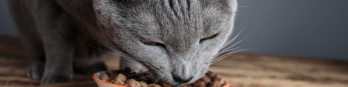 Jak karmić kota: sucha i mokra karma, jak często, o czym należy pamiętać?