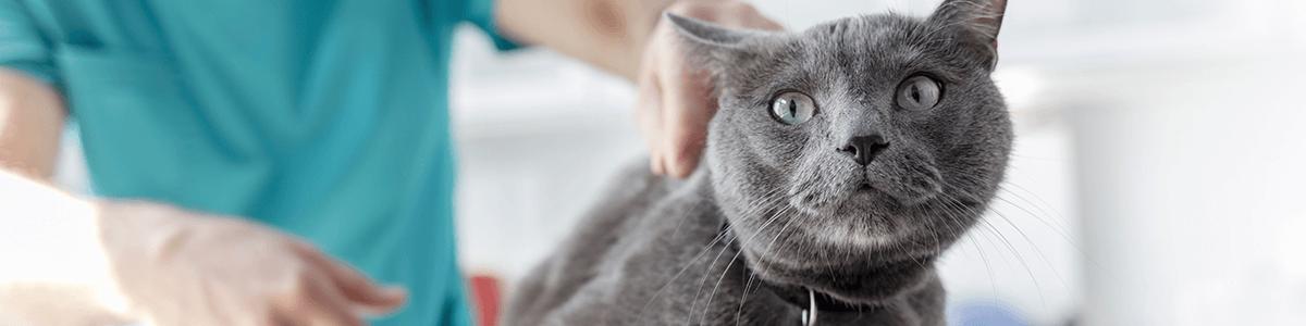 Kastracja (sterylizacja) u kocurów i kotek